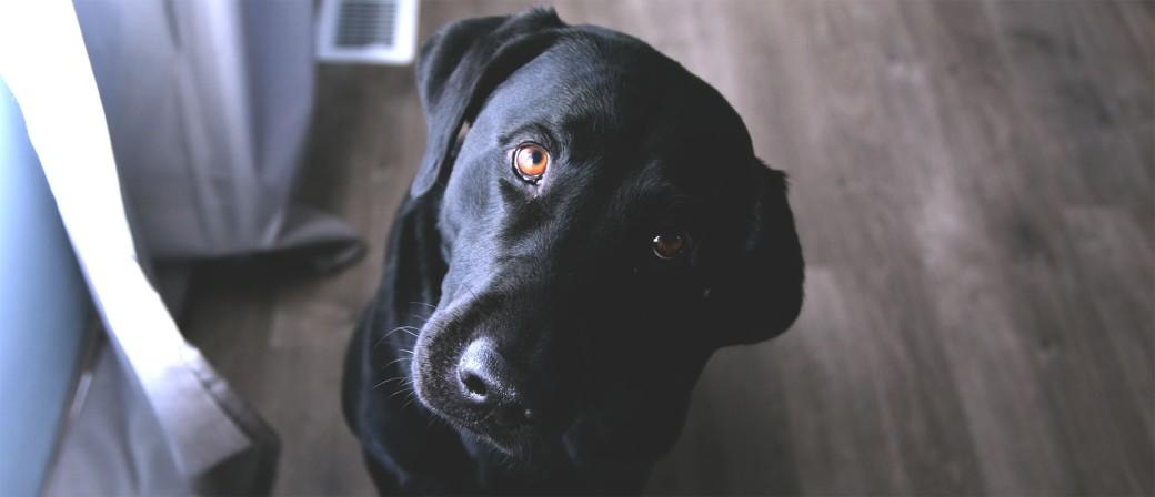 Cachorro curioso - GPS Core